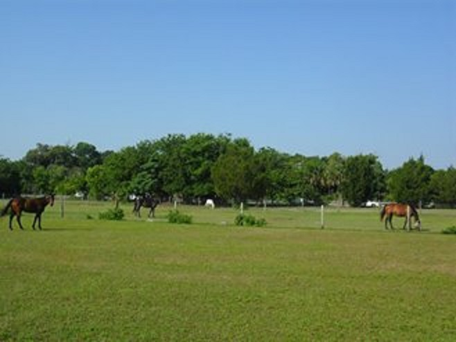 Port Orange Stables , Floirda